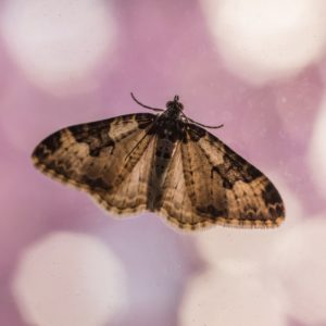 Papillon de nuit sur fenêtre